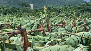 欲哭無淚!「璨樹」橫掃台東毀香蕉田 蕉農整年心血...