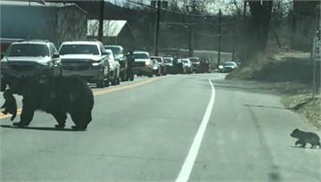 熊媽媽帶4小寶貝過馬路 警察出動幫忙交管
