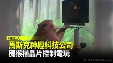 馬斯克神經科技公司 獼猴植晶片控制電玩
