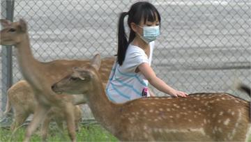 台版「奈良公園」超療癒!13隻溫馴小鹿超萌亮相