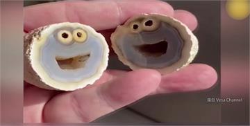 火山岩切開喜見餅乾怪獸! 收藏家開價28萬收購