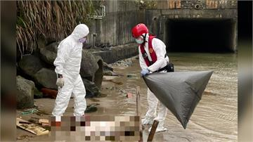 台灣首見海漂死豬! 確認感染非洲豬瘟
