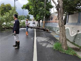 高雄深夜大雨 彌陀路樹橫倒路中間擋車道