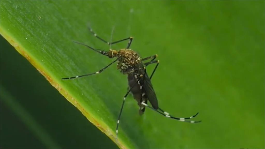 菲國發布登革熱為全國流行性疾病。圖:翻攝自網路
