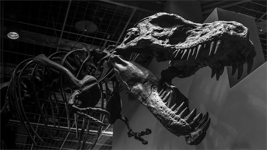 美國古生物學者發現至少7種恐龍不但出現在北極地區,而且還能繁殖下一代。示意圖/翻攝自Pixabay