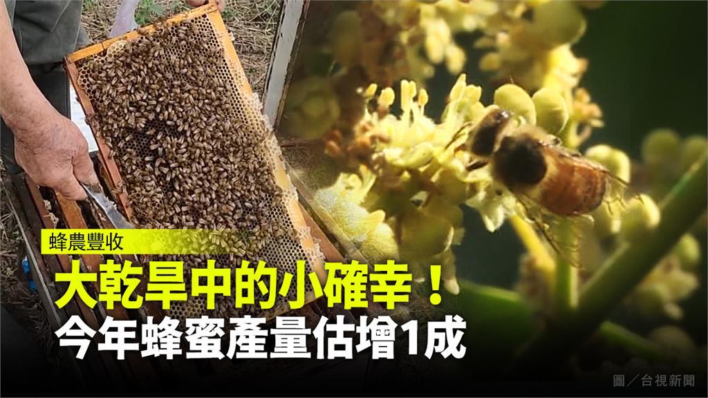 大乾旱中的小確幸!今年蜂蜜產量估增1成