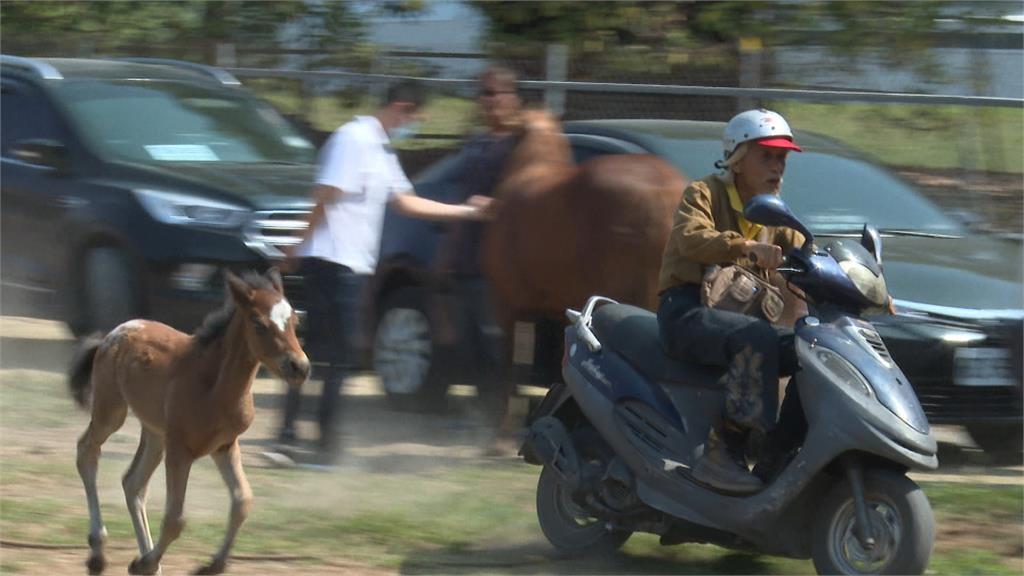 騎士牽「迷你馬」違規上路 民眾嚇傻報警