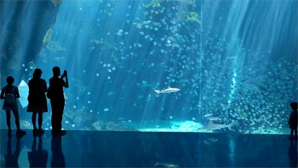 「XPark水族館」於警戒降級後首度開放迎客。圖/台視新聞