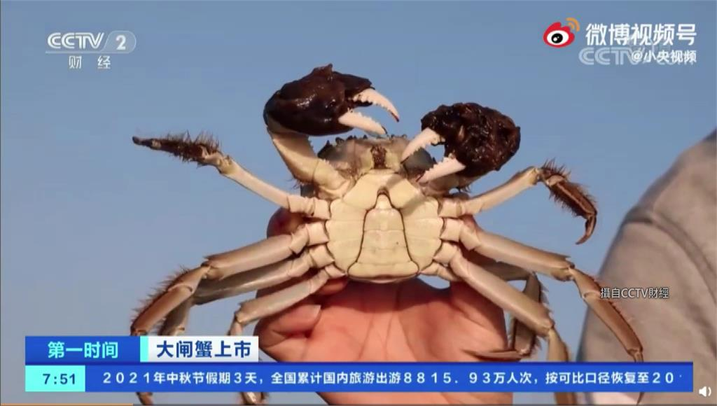 秋天是吃蟹的季節,名列老饕必吃的陽澄湖大閘蟹22日正式開捕。圖/翻攝自CCTV