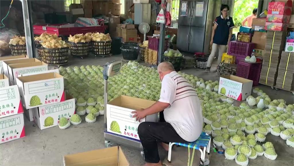 9成釋迦外銷中國,台東農民憂滯銷價格下滑。圖/台視新聞