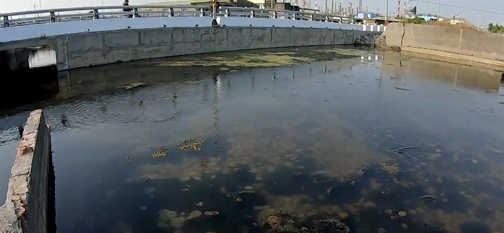 汕尾的廢棄魚塭出現大量的倒立水母。圖:台視新聞
