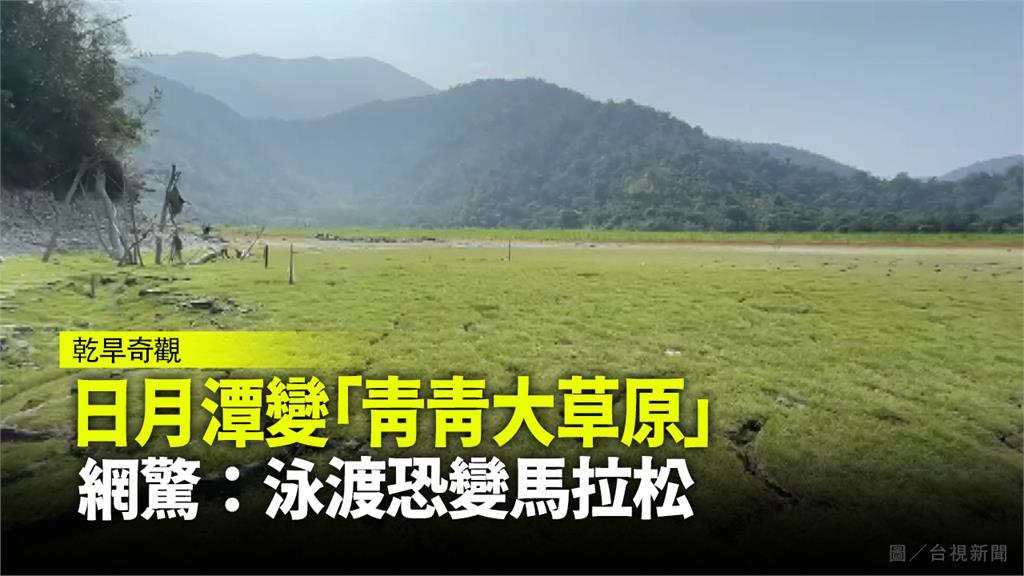 日月潭變「青青大草原」,每年的泳渡盛會恐變成馬拉松。圖/台視新聞