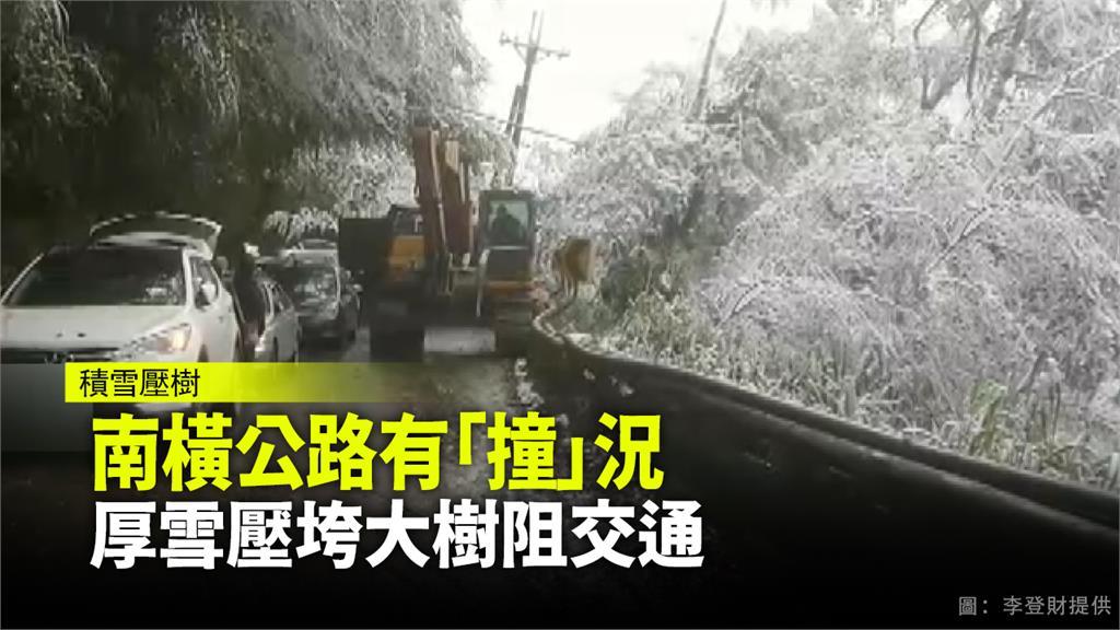 南橫公路發生路樹倒塌的事故。圖:民眾李登財提供