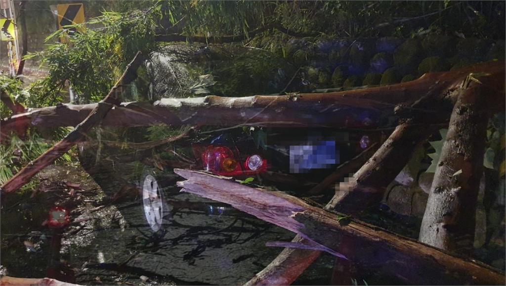 受到颱風外圍環流影響,桃園龜山區一處山坡路樹倒塌,砸中小客車。圖/台視新聞
