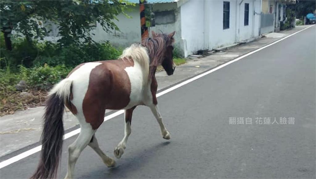 花蓮兒童發展協會「療癒馬」走失! 警機警尋回