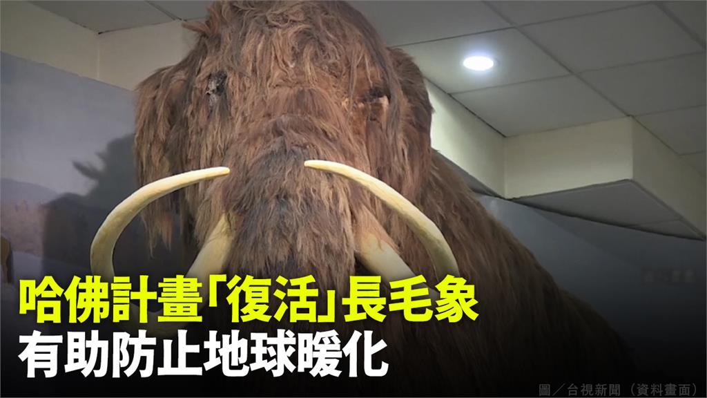 長毛象有望4~6年後復活,重現世人面前。圖/台視新聞(資料畫面)