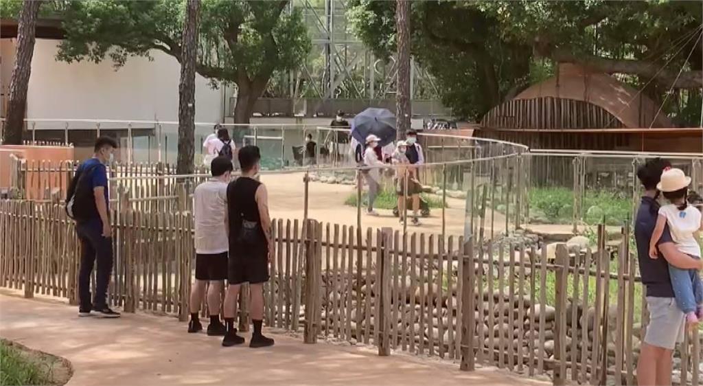 不少民眾到新竹市立動物園玩。圖/台視新聞